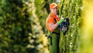 Hedge Trimming Job