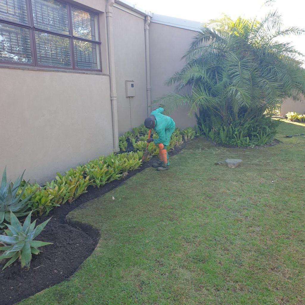 Cleaning flowerbeds